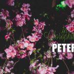 Discoteca Peter Pan RiccioneIn Clorophilla
