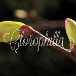 Clorophilla Villa delle Rose Misano